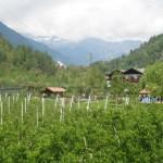 Weinanbau am Lago di Garda